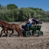 Racing on horse carriage - Puszta Olympics