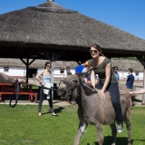 The task: lead a ball till the targetpoint on the back of a donkey - Puszta Olympics